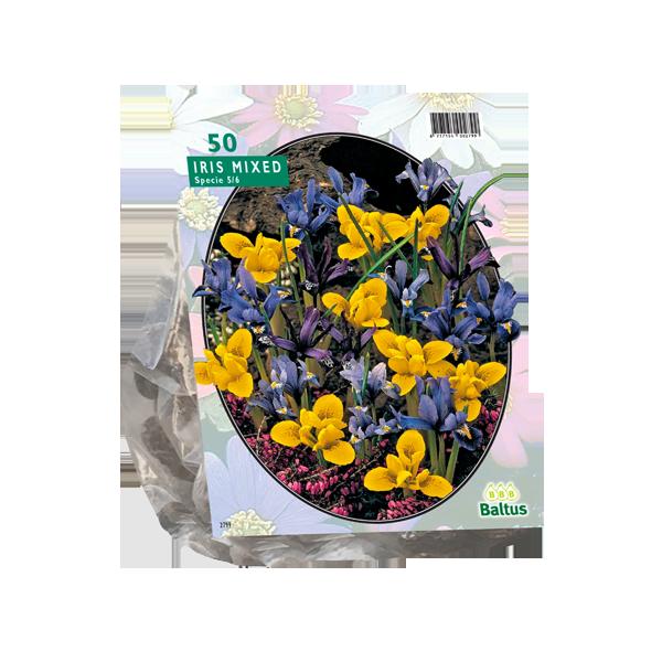 Bilde av Iris Reticulata, Mix.  Løk størrelse: 5/6. Antall