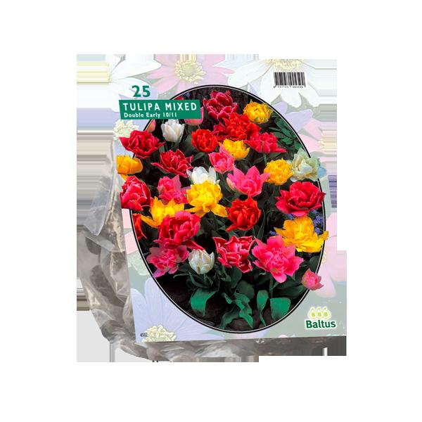 Bilde av Tulipa Dubbel Mix. Løk størrelse: 10/11. Antall