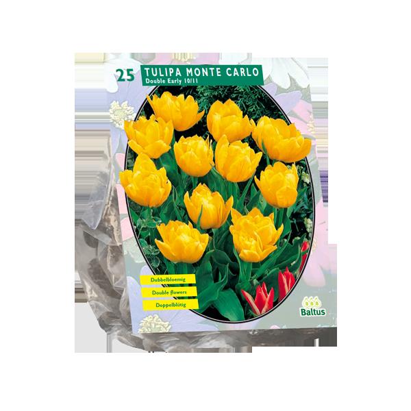 Bilde av Tulipa Dubbel Laat Yellow Pompenette . Løk