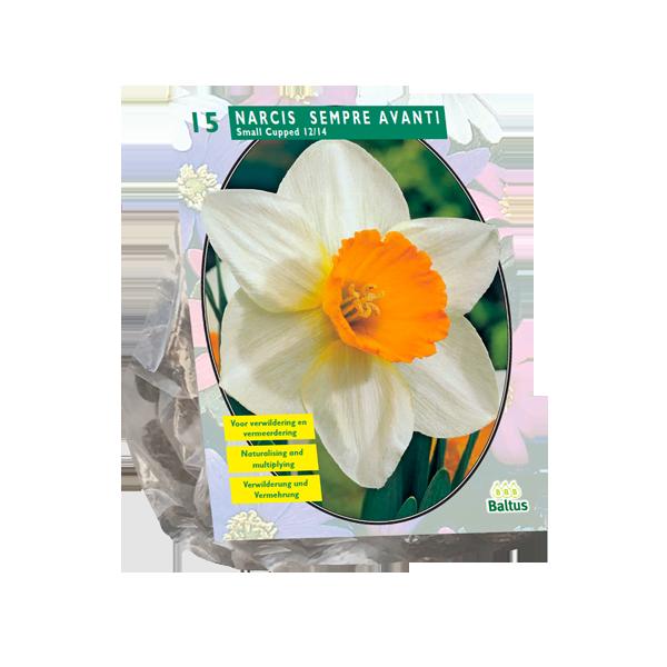 Bilde av Narcis 'Sempre Avanti' - 15stk blomsterløk av