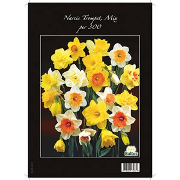 Bilde av Narcis 'Trompet, Mix' - 300 stk. blomsterløk av