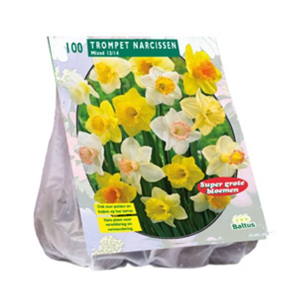 Bilde av Narcis 'Trompet, Mix' - 100 stk av blomsterløk av
