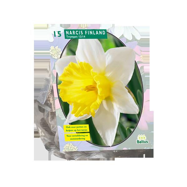 Bilde av Narcis 'Finland' 15 stk blomsterløk av pinselije
