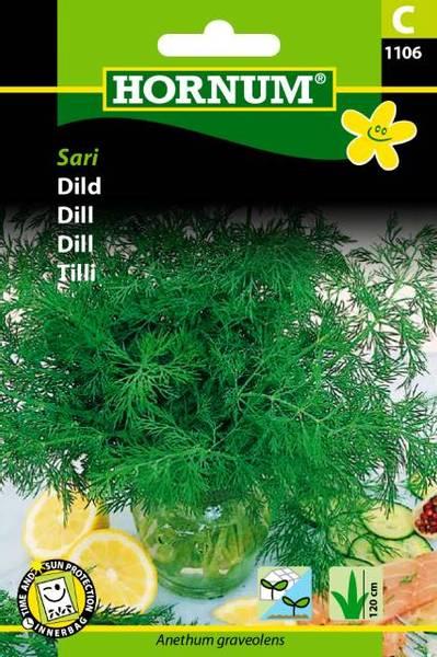 Bilde av Dill Sari(Lat: Anethum graveolens)
