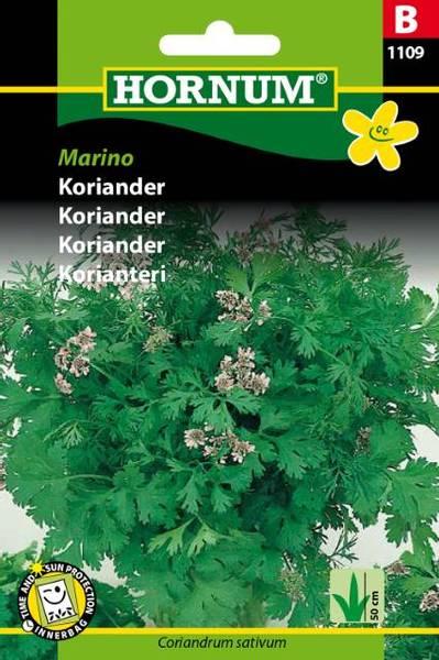 Bilde av Koriander Marino(Lat: Coriandrum sativum)