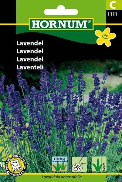 Bilde av Lavendel(Lat: Lavandula angustifolia)