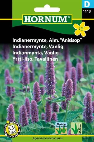 Bilde av Indianermynte, Vanlig(Lat: Agastache foeniculum)