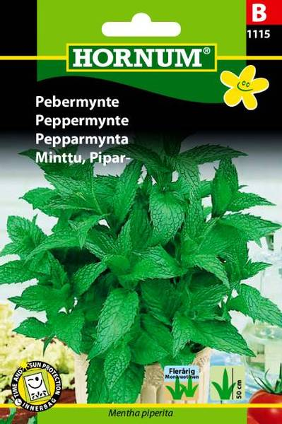 Bilde av Peppermynte(Lat: Mentha piperita)