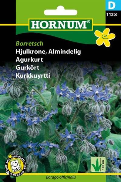 Bilde av Agurkurt Borretsch(Lat: Borago officinalis)
