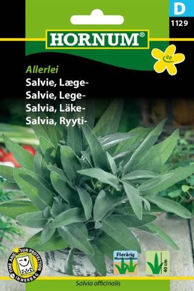 Bilde av Salvie, Lege-Allerlei(Lat: Salvia officinalis)