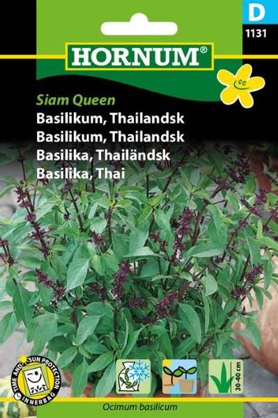 Bilde av Basilikum, Thailandsk Siam Queen(Lat: Ocimum