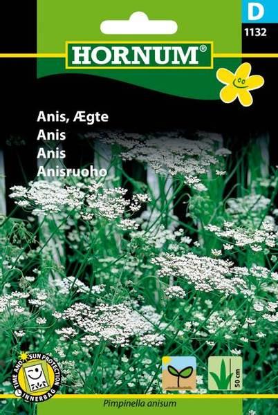 Bilde av Anis(Lat: Pimpinella anisum)