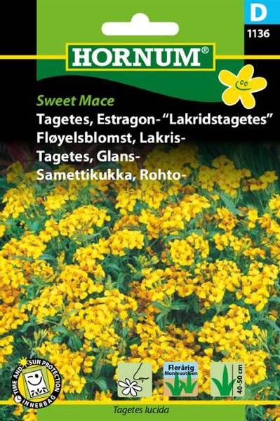 Bilde av Fløyelsblomst, Lakris-Sweet Mace(Lat: Tagetes