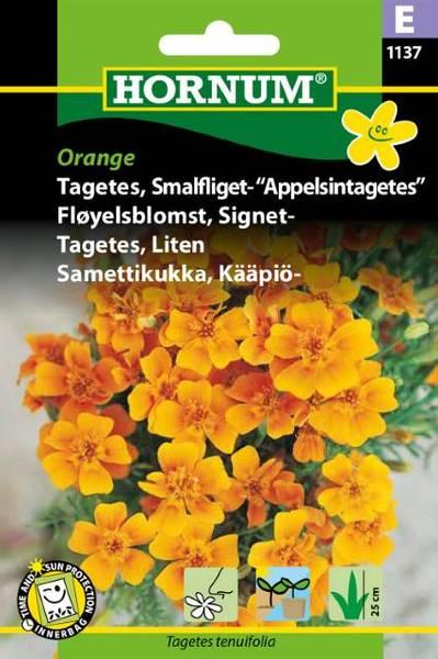 Bilde av Fløyelsblomst, Signet-Orange(Lat: Tagetes