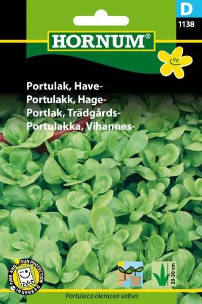 Bilde av Portulakk, Hage-(Lat: Portulaca oleracea sativa)