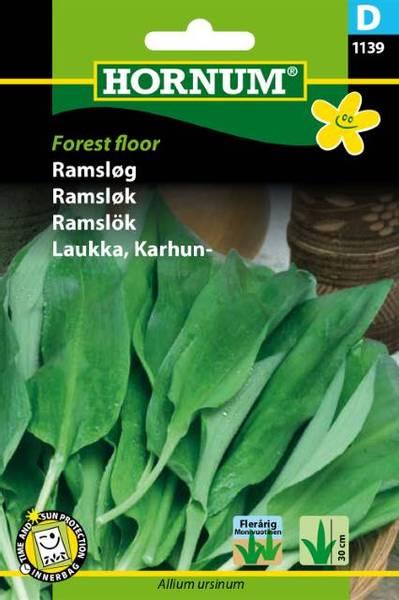 Bilde av Ramsløk Forest floor(Lat: Allium ursinum)