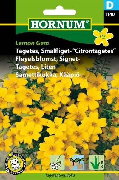 Bilde av Fløyelsblomst, Signet-Lemon Gem(Lat: Tagetes