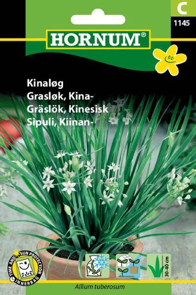 Bilde av Gressløk, Kina-(Lat: Allium tuberosum)