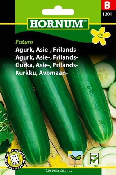 Bilde av Agurk, Asie-, Frilands-Fatum(Lat: Cucumis