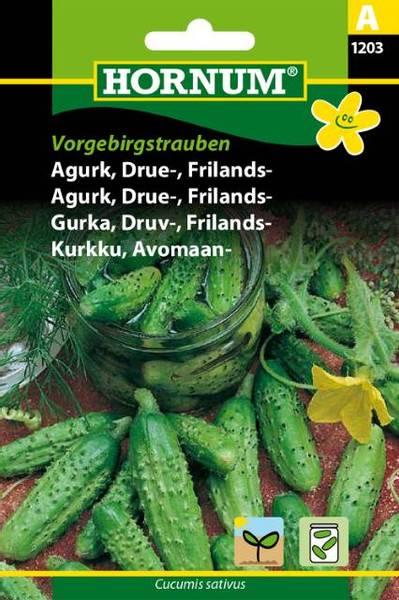Bilde av Agurk, Drue-, Frilands-Vorgebirgstrauben(Lat: