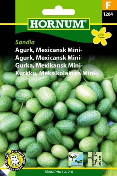 Bilde av Agurk, Mexicansk Mini-Sandia(Lat: Melothria