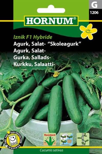 Bilde av Agurk, Salat-Iznik   Hybride(Lat: Cucumis