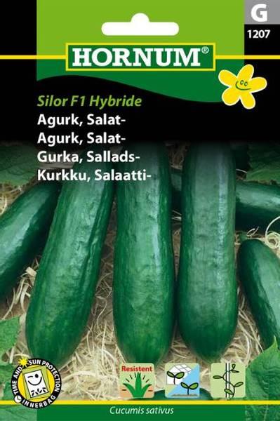 Bilde av Agurk, Salat-Silor   Hybride(Lat: Cucumis