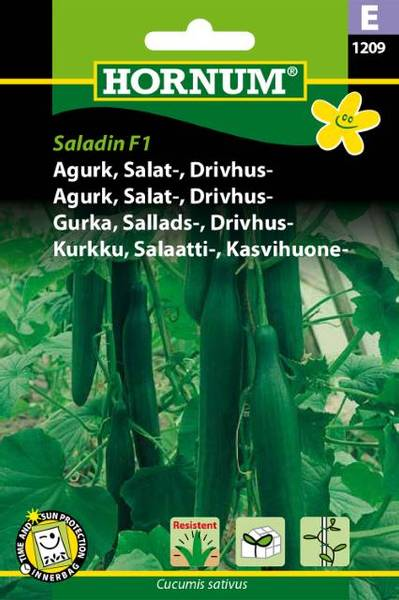 Bilde av Agurk, Salat-, Drivhus-Salatin  (Lat: Cucumis