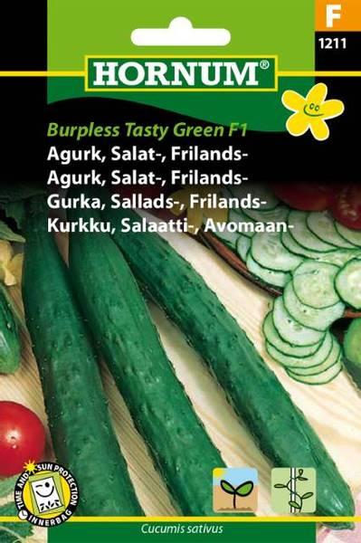 Bilde av Agurk, Salat-, Frilands-Burpless Tasty Green