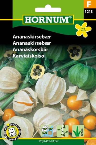 Bilde av Ananaskirsebær(Lat: Physalis edulis)