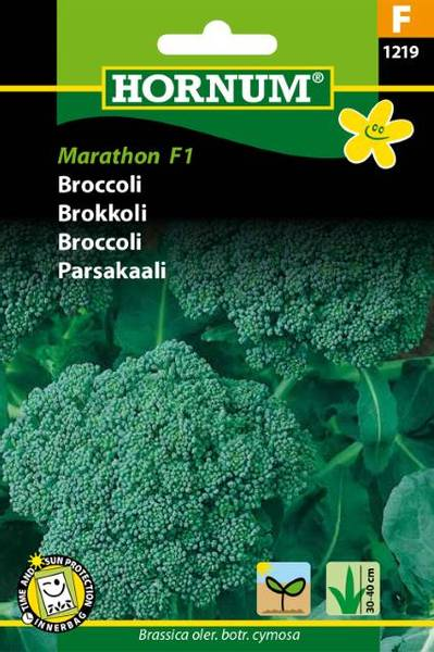 Bilde av Brokkoli Marathon (Lat: Brassica oler. botr.