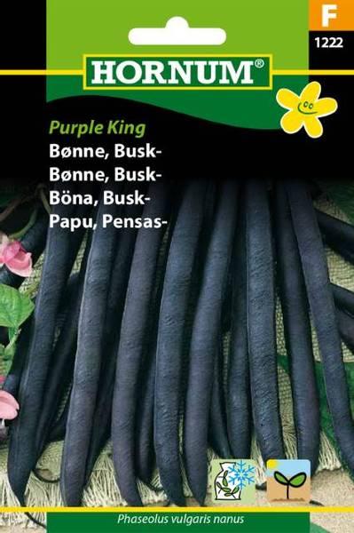 Bilde av Bønne, Busk-Purple King(Lat: Phaseolus vulgaris