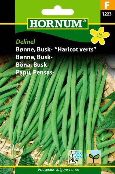 Bilde av Bønne, Busk-Delinel(Lat: Phaseolus vulgaris