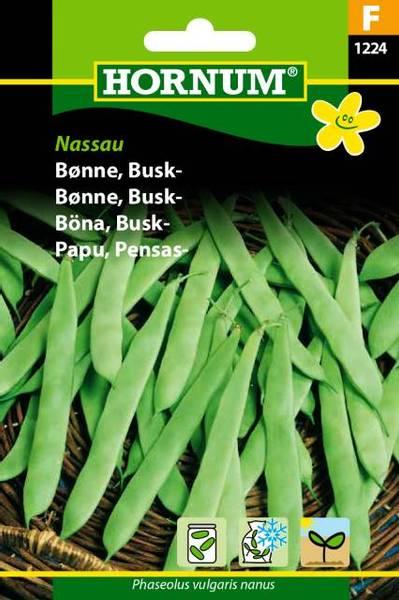 Bilde av Bønne, Busk-Nassau(Lat: Phaseolus vulgaris nanus)