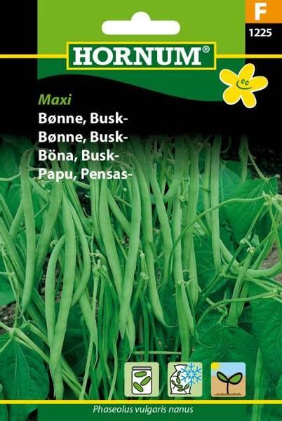 Bilde av Bønne, Busk-Maxi(Lat: Phaseolus vulgaris nanus)