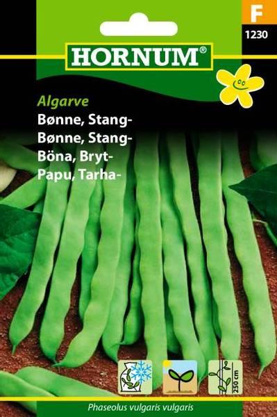 Bilde av Bønne, Stang-Algarve(Lat: Phaseolus vulgaris