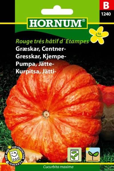 Bilde av Gresskar, Kjempe-Rouge trés hâtif d´Etampes(Lat: