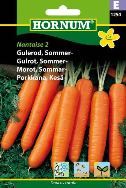 Bilde av Gulrot, Sommer-Nantaise (Lat: Daucus carota)