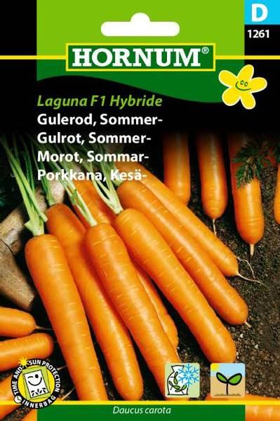 Bilde av Gulrot, Sommer-Laguna   Hybride(Lat: Daucus