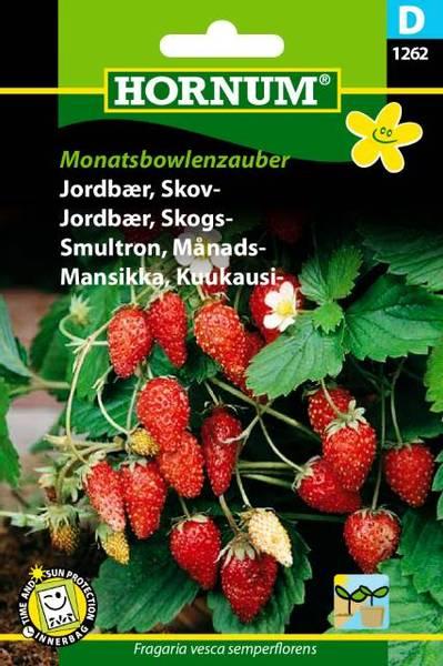 Bilde av Jordbær, Skogs-Monatsbowlenzauber(Lat: Fragaria