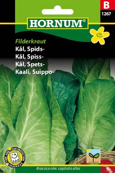 Bilde av Kål, Spiss-Filderkraut(Lat: Brassica oler.