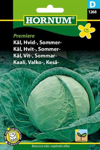 Bilde av Kål, Hvit-, Sommer-Premiere(Lat: Brassica oler.