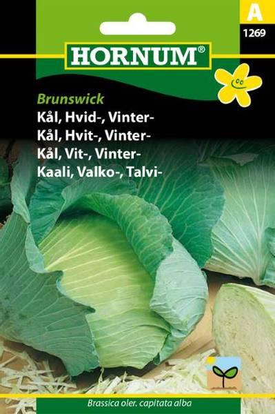 Bilde av Kål, Hvit-, Vinter-Brunswick(Lat: Brassica oler.