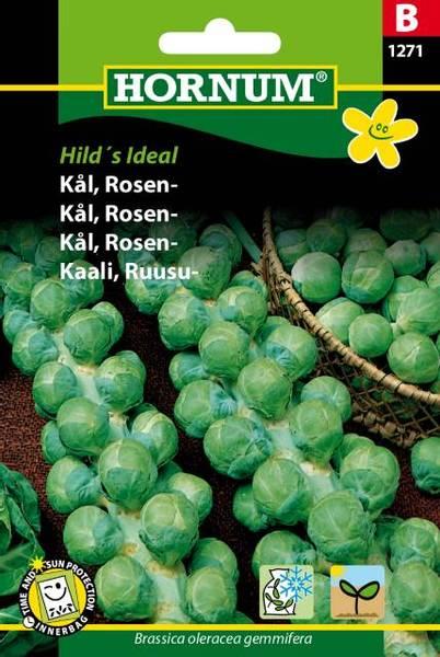 Bilde av Kål, Rosen-Hild's Ideal(Lat: Brassica oleracea