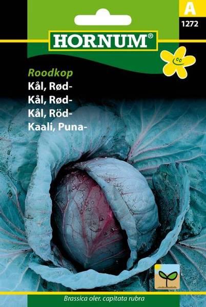Bilde av Kål, Rød-Roodkop(Lat: Brassica oler. capitata