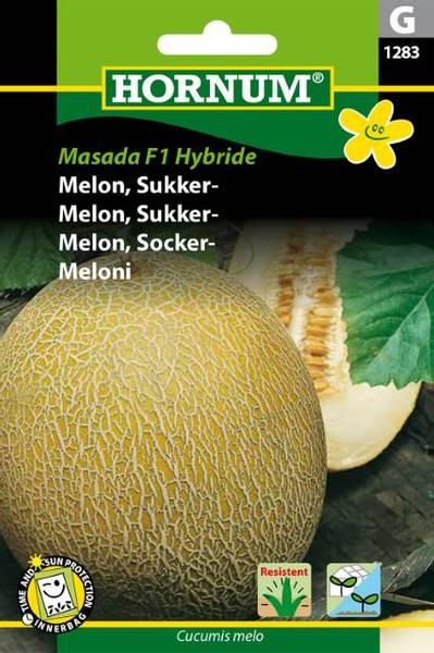Bilde av Melon, Sukker-Masada  Hybride(Lat: Cucumis melo)