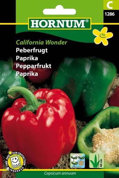 Bilde av Paprika California Wonder(Lat: Capsicum annuum)