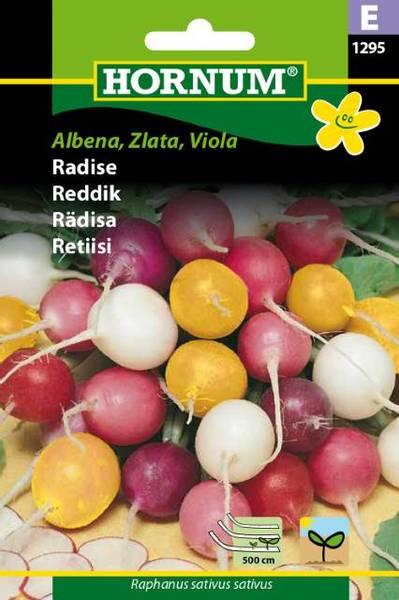 Bilde av Reddik Albena, Zlata, Viola(Lat: Raphanus sativus