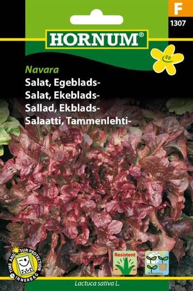 Bilde av Salat, Ekeblads-Navara(Lat: Lactuca sativa L.)