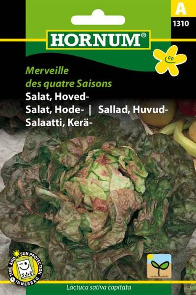 Bilde av Salat, Hode-Merveille des quatre Saisons(Lat: